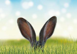 Rabbit ears peeking up from grass