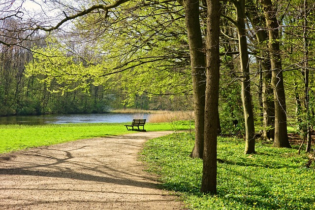 park bench among trees, grass, and lake