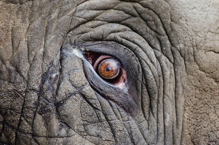 elephant with wrinkles